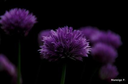 Purple underworld
