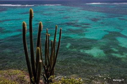 Cactus sur la trace des Caps