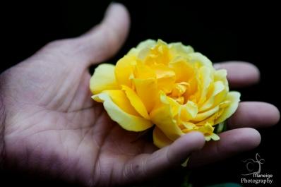 Precious last rose