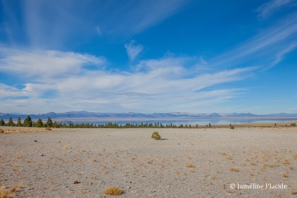 Nevada (Mono Lake on background)