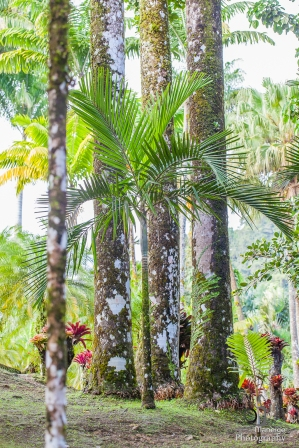 Balata Garden